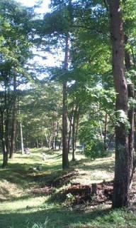 ☆森林浴☆